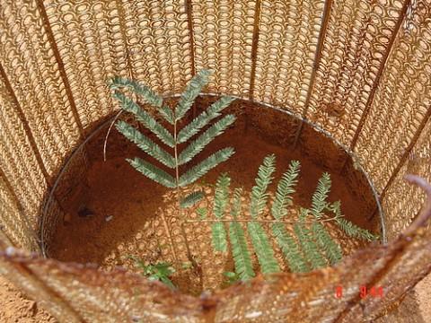 Tree Aid