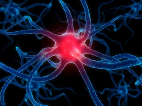 Nerve-Cell-4