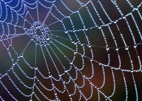 spider-web-e1385018500499